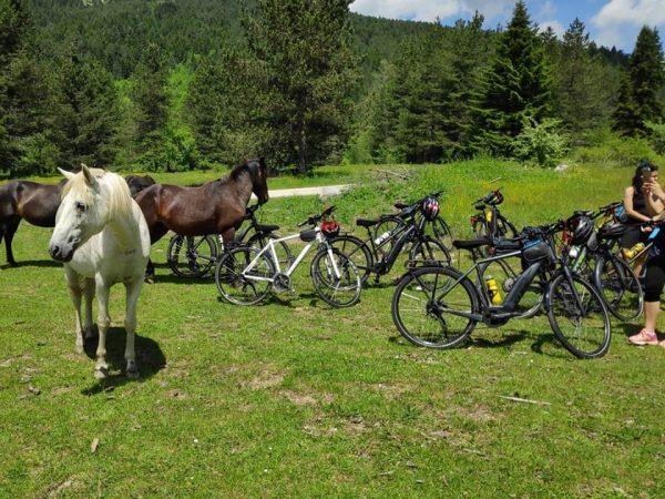 Bikewise-2.jpg
